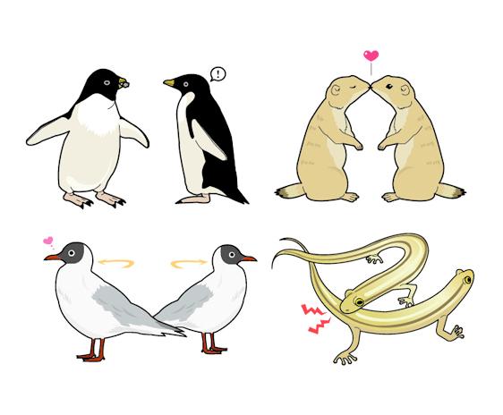i_courtship